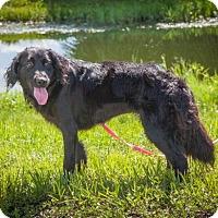 Adopt A Pet :: Nicole 709 - Naples, FL