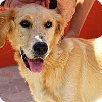 Adopt A Pet :: Daphne - BIRMINGHAM, AL