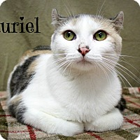Domestic Shorthair Cat for adoption in Melbourne, Kentucky - Tauriel