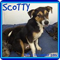 Adopt A Pet :: SCOTTY - New Brunswick, NB