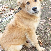 Adopt A Pet :: Jenna - BIRMINGHAM, AL