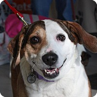 Adopt A Pet :: Janie - Gilbertsville, PA
