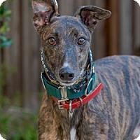 Adopt A Pet :: Redneck - Walnut Creek, CA