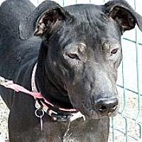 Adopt A Pet :: Lucy - Gilbert, AZ