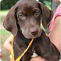 Adopt A Pet :: Whiskey - Cumming, GA