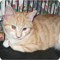 Adopt A Pet :: Mitsy - Colmar, PA