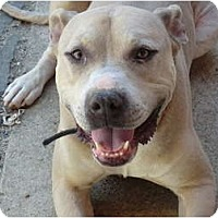 Adopt A Pet :: TYSON - The Big Handsome! - Sacramento, CA