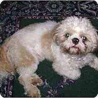 Adopt A Pet :: Brady - Dayton, OH