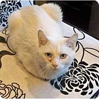 Adopt A Pet :: Frank Sinatra - Secaucus, NJ