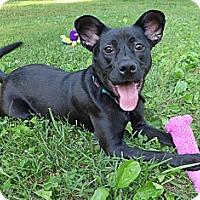 Adopt A Pet :: Serena - Mocksville, NC