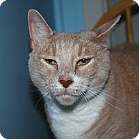 Adopt A Pet :: Ginger - North Branford, CT