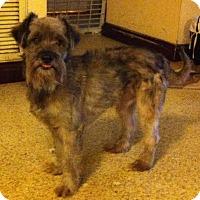 Standard Schnauzer Dog for adoption in West Palm Beach, Florida - Smokey