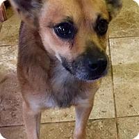 Adopt A Pet :: Max - Winder, GA