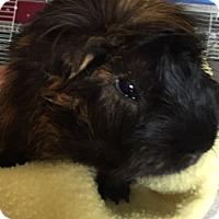 Adopt A Pet :: Jeremiah - Steger, IL