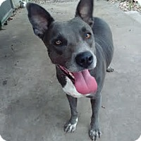 Adopt A Pet :: Cheyenne - White Settlement, TX