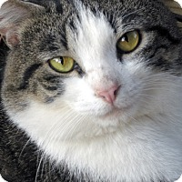 Adopt A Pet :: Bobby - Germantown, MD