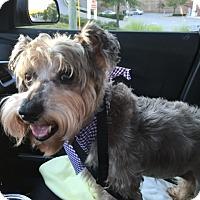 Adopt A Pet :: Gidget - Alpharetta, GA