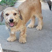 Shaggy Dog Rescue Ct