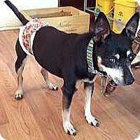Adopt A Pet :: Bijou - Malaga, NJ