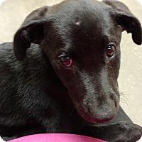 Adopt A Pet :: Tyson - Tampa, FL