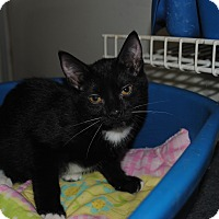 Adopt A Pet :: Willow - Bay City, MI