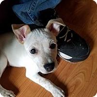 Adopt A Pet :: TIERNAN - joliet, IL