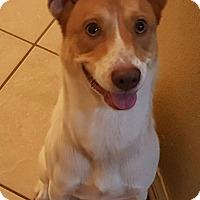 Adopt A Pet :: buddy - Navarre, FL