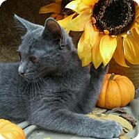 Adopt A Pet :: Shelby - Barrington, NJ