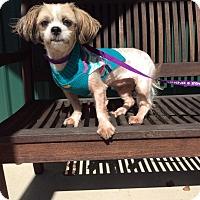 Adopt A Pet :: Isabella - Mechanicsburg, OH