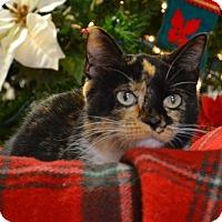 Adopt A Pet :: Sparkle - Lebanon, MO