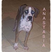 Adopt A Pet :: Anastasia - Tempe, AZ