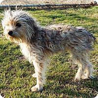 Adopt A Pet :: Willow - Allen, TX