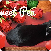 Adopt A Pet :: Sweet Pea - Davison, MI