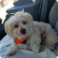 Adopt A Pet :: Walden - Las Vegas, NV