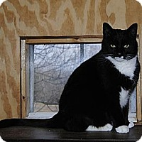 Adopt A Pet :: Miss Kitty - N. Berwick, ME