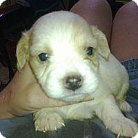 Adopt A Pet :: Opal - Cumberland, MD