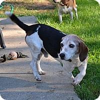 Adopt A Pet :: Charming - Novi, MI