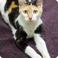 Adopt A Pet :: Tansy - Chicago, IL