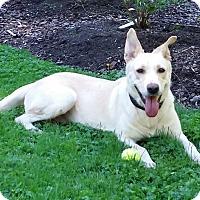 Adopt A Pet :: Molly - Mill Creek, WA