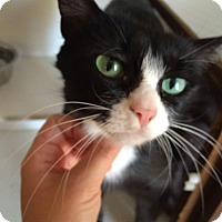Adopt A Pet :: Missy - Battle Ground, WA