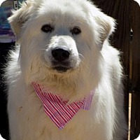 Adopt A Pet :: Blanca-ADOPTED 4/3/16! - Apple Valley, CA