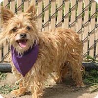 Adopt A Pet :: LOLA - Norco, CA