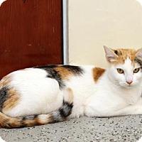 Adopt A Pet :: Sheila - SAN PEDRO, CA