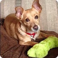 Adopt A Pet :: Dodger - Santa Monica, CA