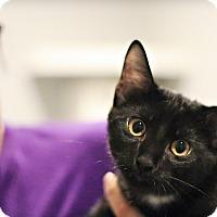Adopt A Pet :: Joplin - Lincoln, NE