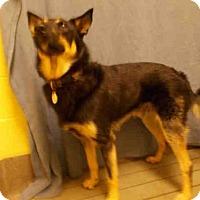 Adopt A Pet :: COOPER - Upper Marlboro, MD