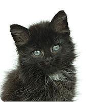Adopt A Pet :: Smoky - Durham, NC