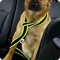 Adopt A Pet :: Sam (Courtesy Post) - Leonardtown, MD