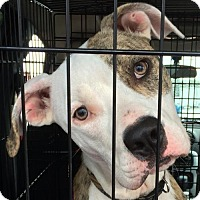 Adopt A Pet :: JOSH-adopted! - Morgantown, IN