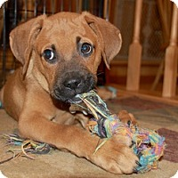 Adopt A Pet :: BAXTER - Milwaukee, WI
